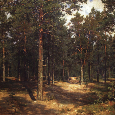 Path among the pines