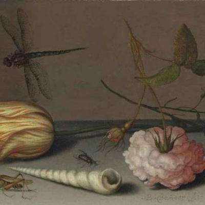 Натюрморт с тюльпаном, розой, ящерицей и стрекозой