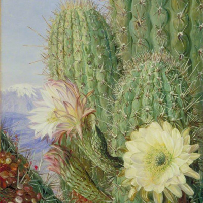 Chilean cacti: blooming and corroded