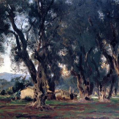 Оливковые деревья на Корфу