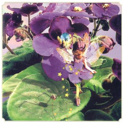 Том Кросс. Фиолетовая фея