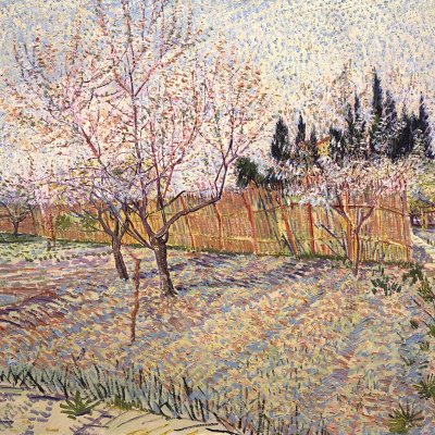 Orchard with peach trees in bloom