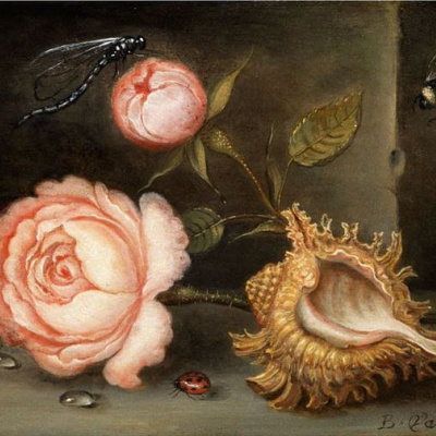Натюрморт с розой, раковиной и насекомыми