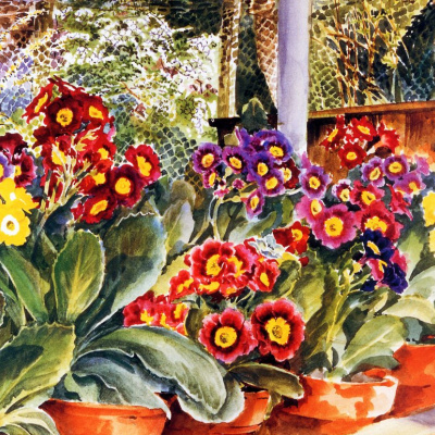 Primroses in the greenhouse (fragment)