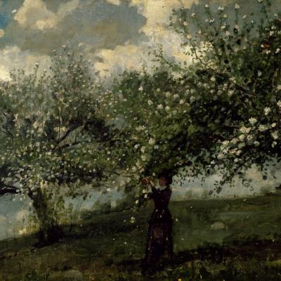 Девушка, собирающая цветы с яблони
