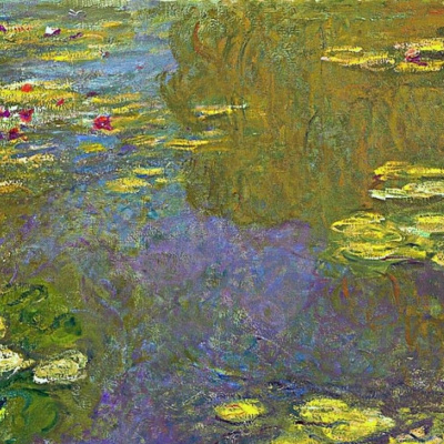 A pond with water lilies