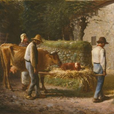 Peasants bring home a calf born in the field.