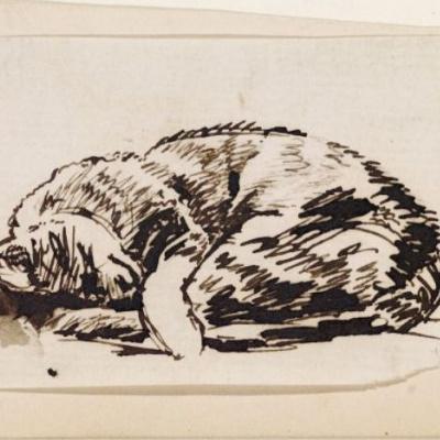 The sleeping cat. Sketch