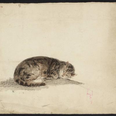 Набросок спящей кошки