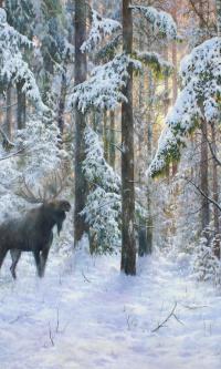 Зимнего леса хозяин