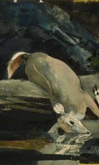 Упавший олень