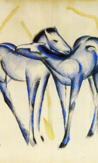 Two blue colt