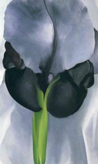 Черный ирис VII