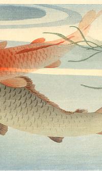 Рыбы 5