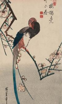 Длиннохвостая сорока-болтунья на цветущей ветке сливового дерева