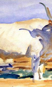 White ox at Siena