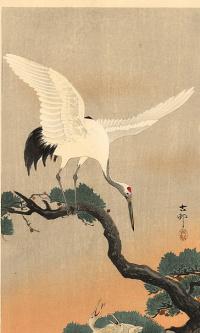 Птицы 76