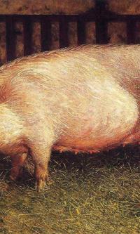 Портрет свиньи