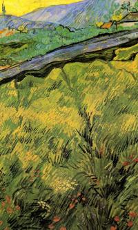 Весеннее пшеничное поле на восходе