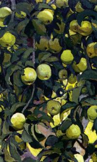 Зеленые яблоки на ветках