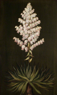 Adam's needle or Yucca, half a full size