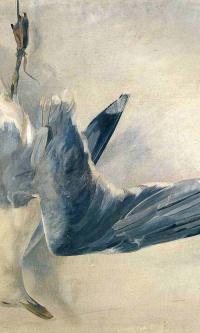 Мёртвая чайка