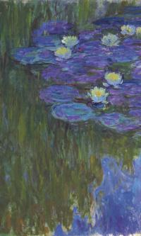 Кувшинки в цвету